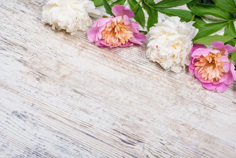 Peônias brancas e cor-de-rosa em uma placa de madeira textured para anunciar, local do vintage velho Configuração lisa, copyspace imagem de stock