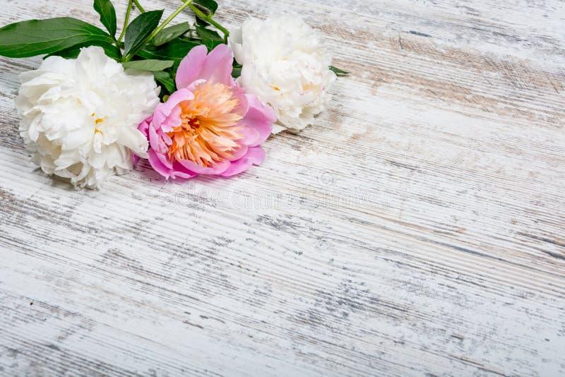 Peônias brancas e cor-de-rosa em uma tabuleta de madeira antiga velha textured para anunciar, Web, configuração do plano, copyspa imagens de stock