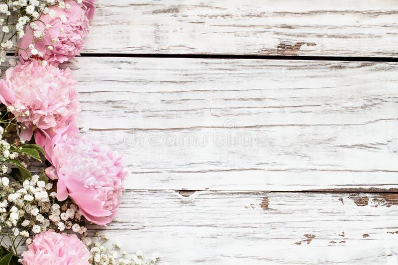 Peônias e flores cor-de-rosa da respiração dos bebês sobre um fundo de madeira branco imagens de stock