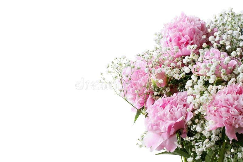 Peônias e flores de florescência cor-de-rosa da respiração dos bebês contra um fundo branco imagens de stock royalty free