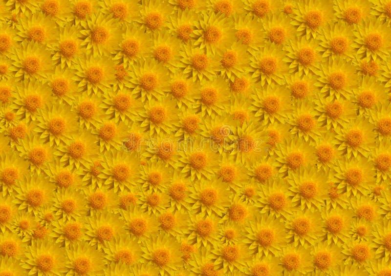 pełna kwiatów wielkiego żółty fotografia royalty free