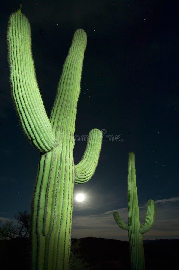 pełna strażnika księżyca zdjęcie stock