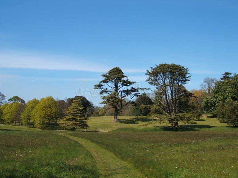 pełni łąkowi drzewa zdjęcia stock