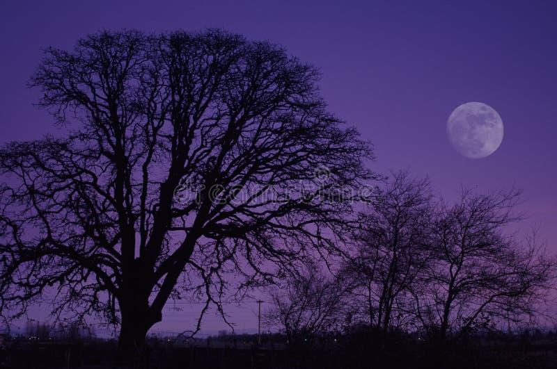 pełnia księżyca zdjęcie stock