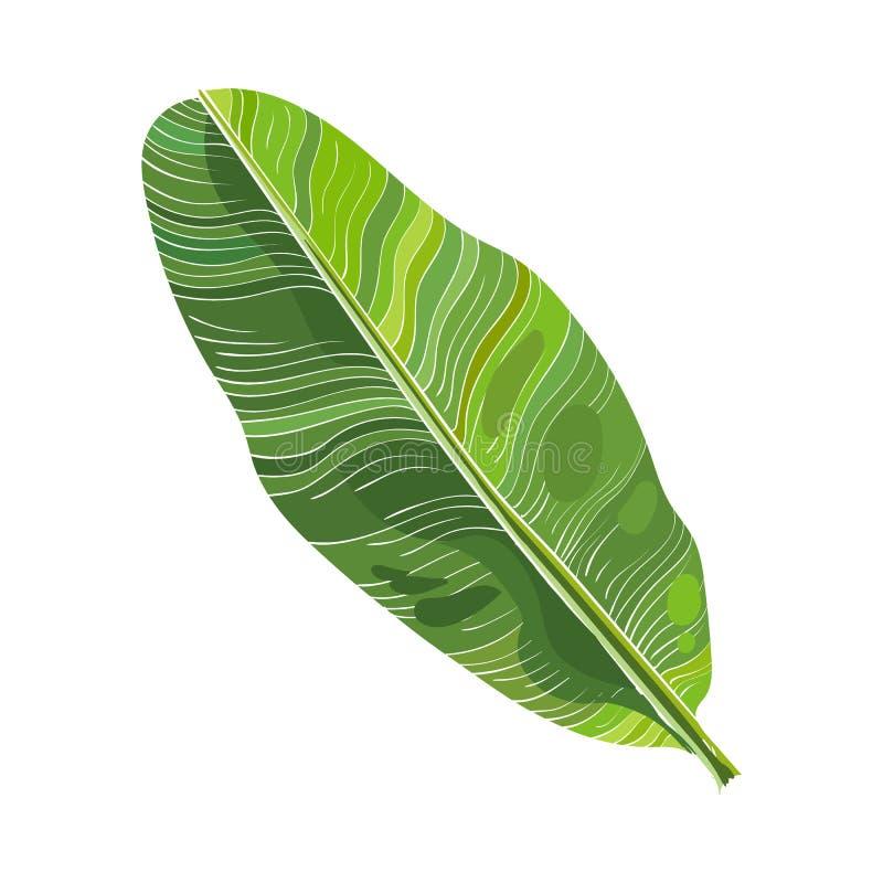 Pełny świeży liść bananowy drzewko palmowe, wektorowa ilustracja ilustracja wektor