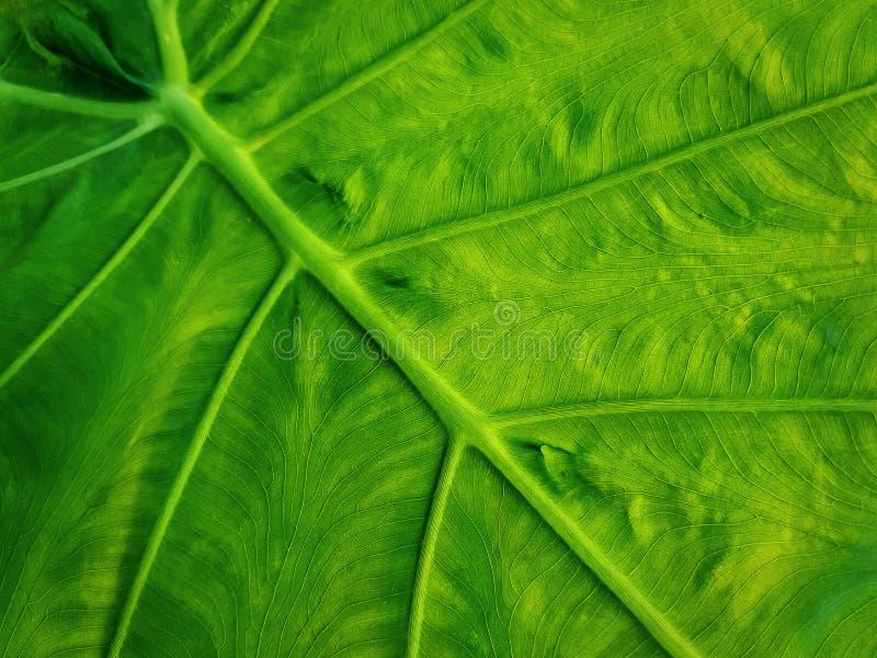 Pełny Ramowy tło Świeża Zielona liść tekstura z Selekcyjną ostrością zdjęcia stock