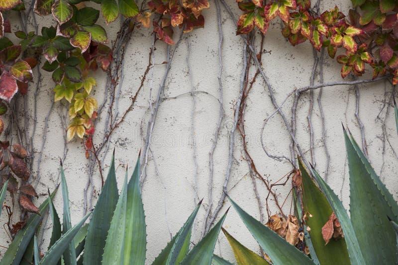 Pełzacze i kaktus rośliny obraz royalty free