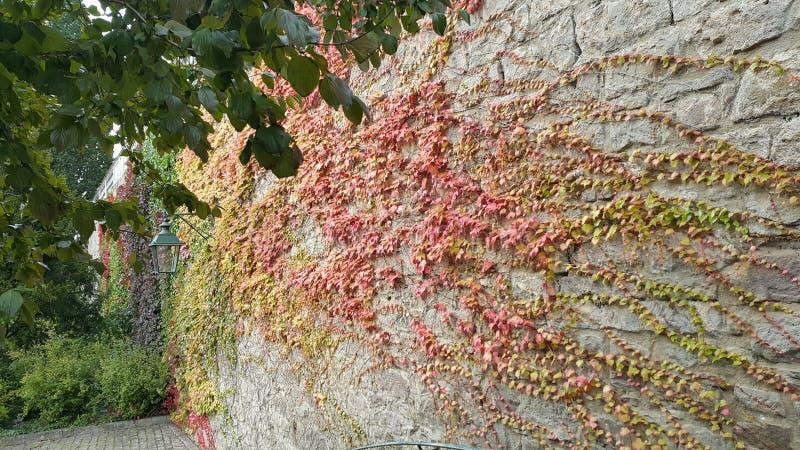 Pełzacze jesień kolory obrazy royalty free