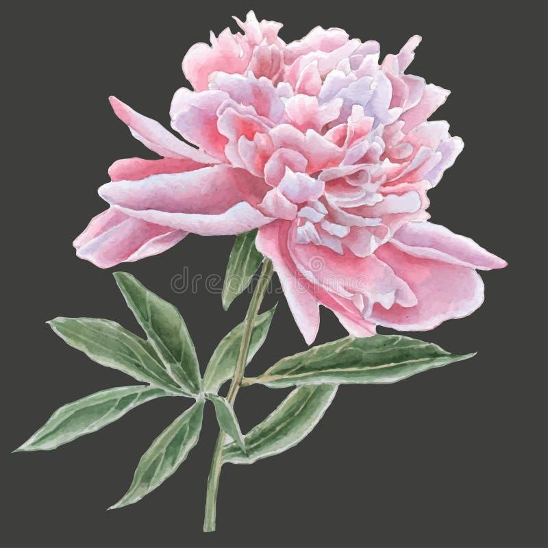 Peônia cor-de-rosa lindo ilustração do vetor