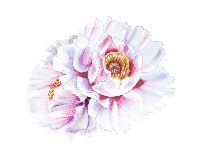 Pe?nias brancas bonitas Ramalhete das flores C?pia floral Desenho do marcador fotografia de stock royalty free