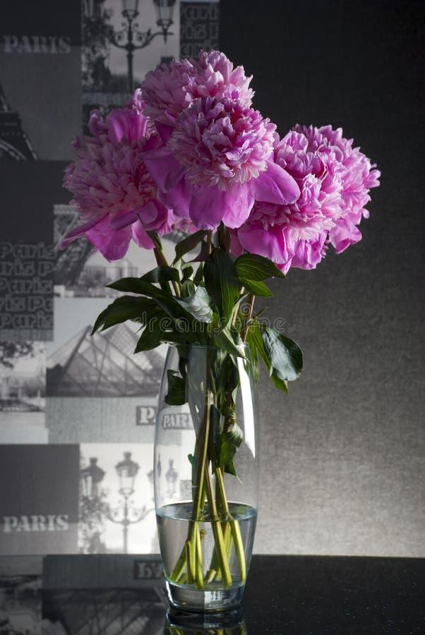 Peônias cor-de-rosa imagens de stock royalty free
