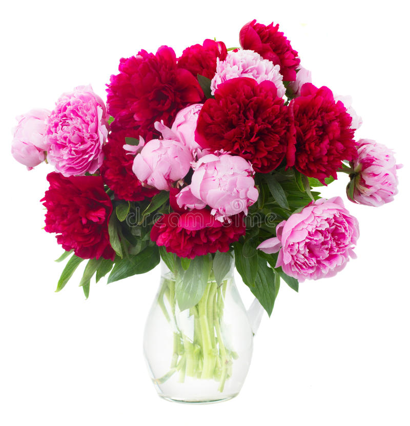 Peônias cor-de-rosa e vermelhas fotos de stock