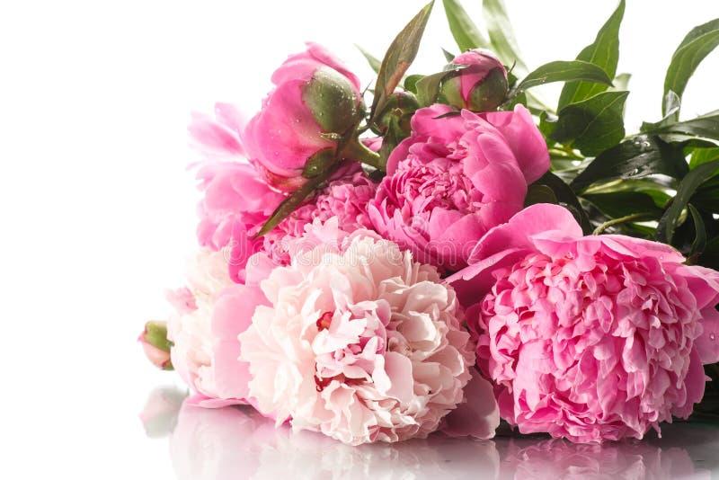 Peônias de florescência bonitas foto de stock