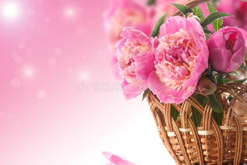 Peônias de florescência bonitas fotografia de stock royalty free