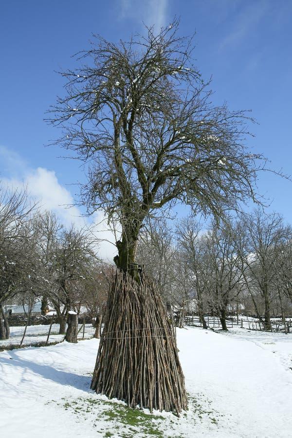 Pea Bean Wigwam Support Canes en un remiendo del huerto Invierno imagen de archivo