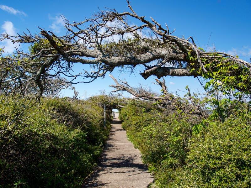 Pea Island National Wildlife Refuge fotos de stock