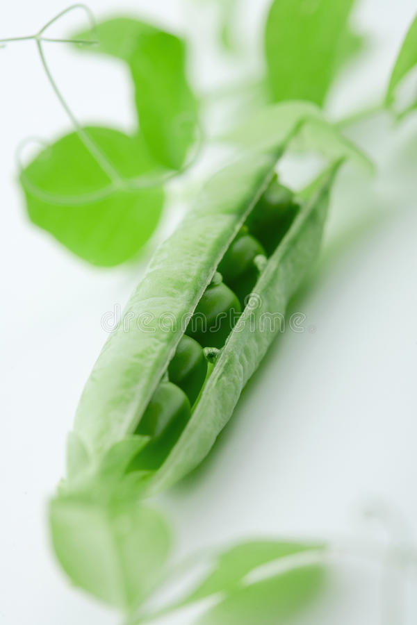 Download Pea Pod stock photo. Image of cracked, foliage, white - 12024390
