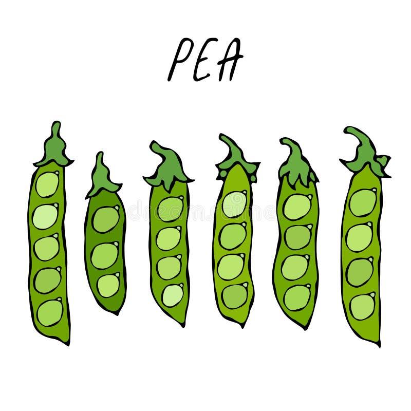 Pea Pod verde pelado Bio comida vegetariana sana Ejemplo de alta calidad dibujado mano realista del vector Doodle el estilo stock de ilustración