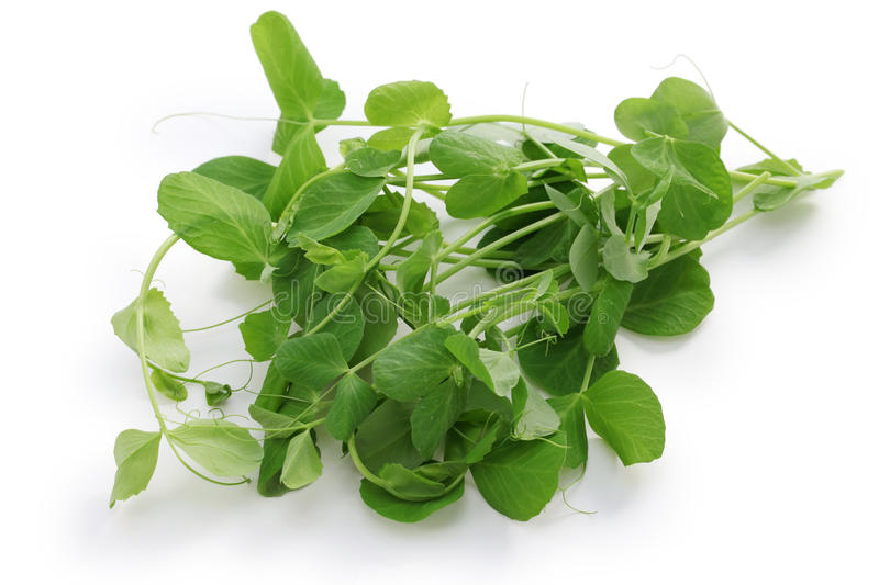 Pea shoots, chinese vegetable royalty free stock images