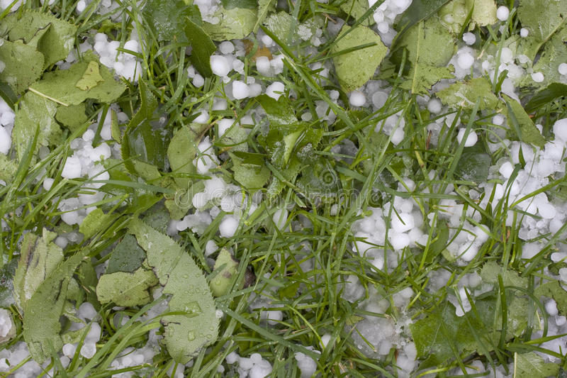 Download Pea Size Hailstones On Grass Stock Image - Image: 9805567