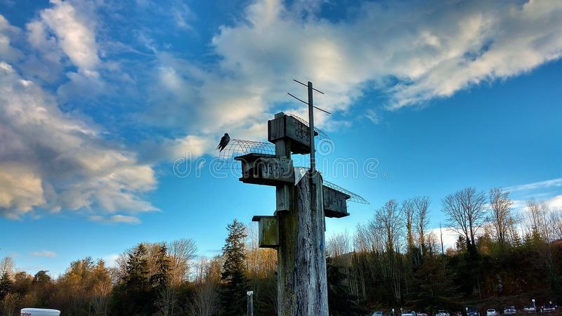 Peace. At last in clear sky`s Vancouver Island royalty free stock images
