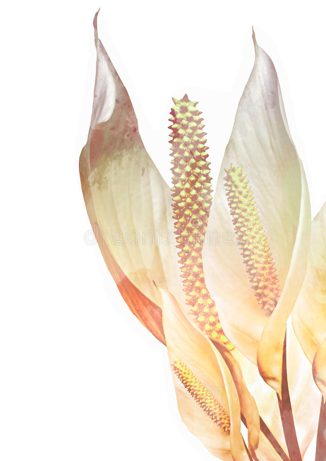 Peace lilly with textured effects stock illustration