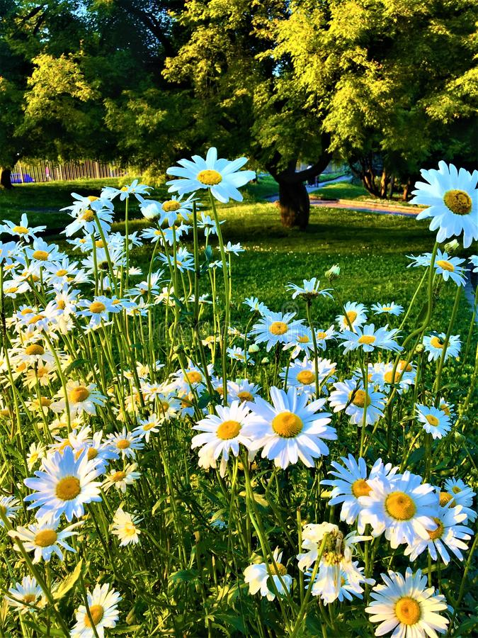 Peace and relax surrounded by nature, enchanting view and beauty in Valentine Park, Turin city, Italy. Tree, flowers, light, spring time, daisy, grass, garden stock photo