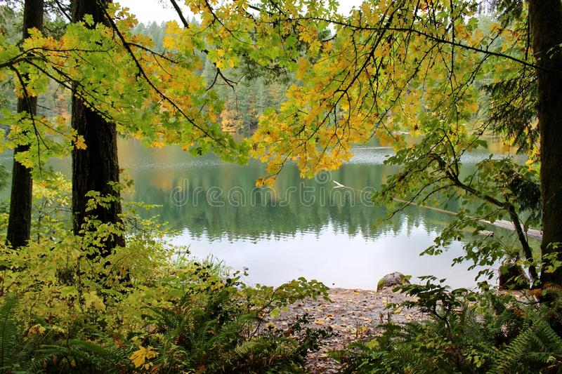 Peace and serenity at the lake, Battle Ground State Park, Lewisville, Washington, USA. `Battle Ground Lake State Park is a 275-acre public recreation area stock photos