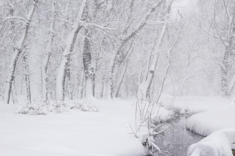 Peace winter nature Wonderland Beauty sunny winter backdrop Beautiful Winter landscape scene background with snow covered trees. And ice river Frosty trees in stock images
