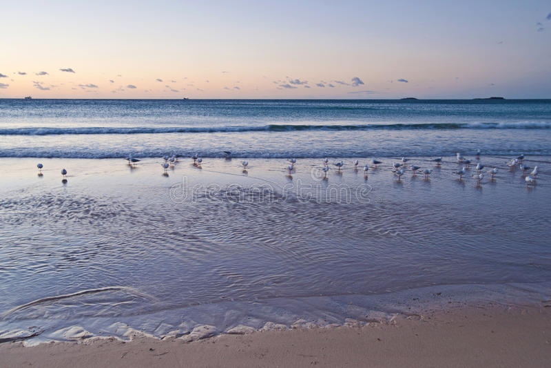 Download Peaceful beach sunrise stock image. Image of nature, landscape - 23408457