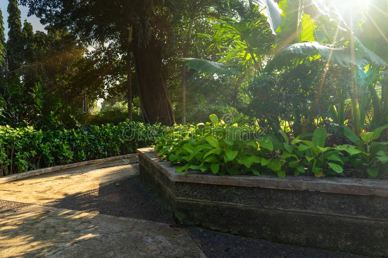 Peaceful Corner of Outdoor Park or Garden in The Morning After Sunrise with Sun Beam or Flare Glowing Through The Green Leaves Can stock images
