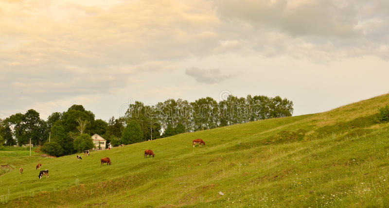 Download Peaceful Country Landscape Stock Images - Image: 26189504