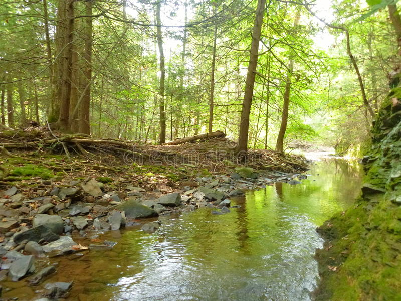 Peaceful creek royalty free stock image
