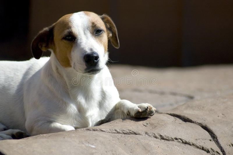 Peaceful Dog stock photos