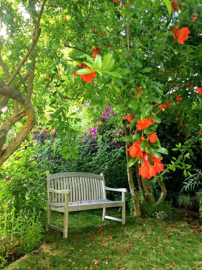 Peaceful empty bench under pomegranate trees stock photos