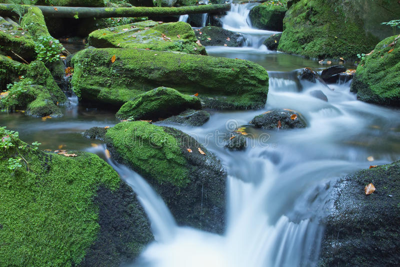 Peaceful flowing stream in the forest stock photos