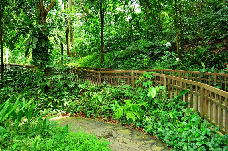 Download Peaceful Garden With Forested Background Stock Photo - Image: 20780298