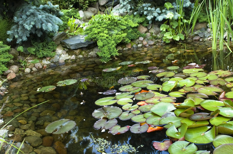 Download Peaceful Garden. Nenuphar Royalty Free Stock Images - Image: 10978329