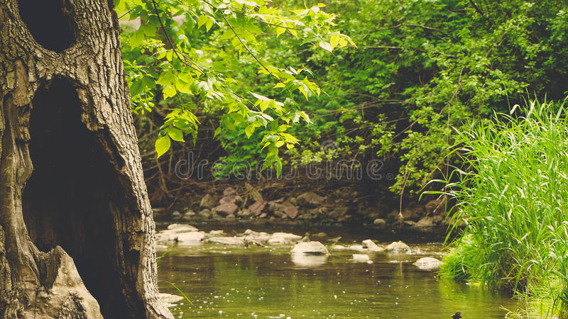 Peaceful Meadow royalty free stock images