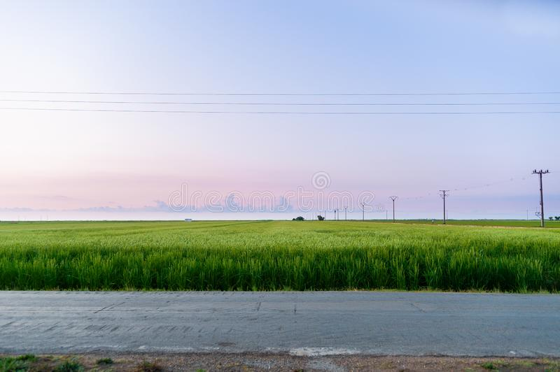 Peaceful and minimalistic scene of paddy field in the early morning dawn with warm and purple light and few clouds in the sky in royalty free stock photo