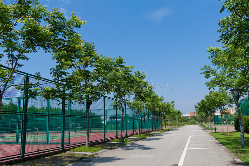 Download Peaceful Morning And Stadium In The University Stock Photo - Image: 22393040