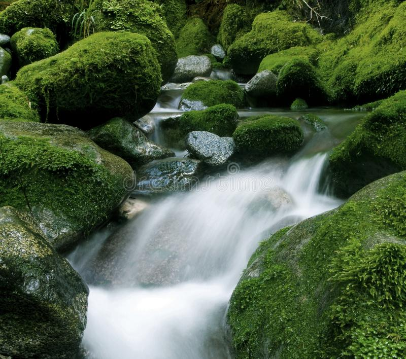 Peaceful nature stream, New Zealand. royalty free stock photography