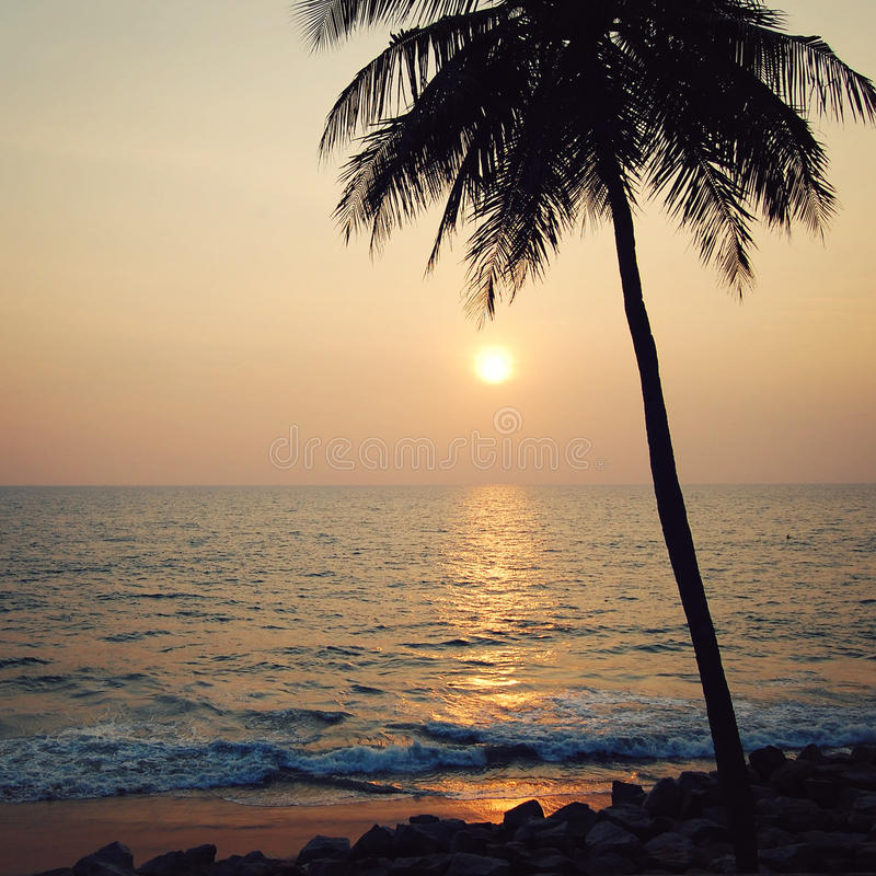 Tropical Beach And Peaceful Ocean: Peaceful Ocean On Sunset And Lone Palm Tree