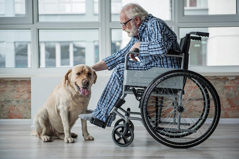 Serene senior desiabed man petting the hound indoors stock photos