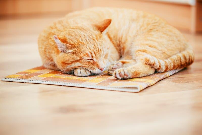 Download Peaceful Orange Red Tabby Cat Male Kitten Sleeping Stock Photo - Image of kitten, home: 49877604