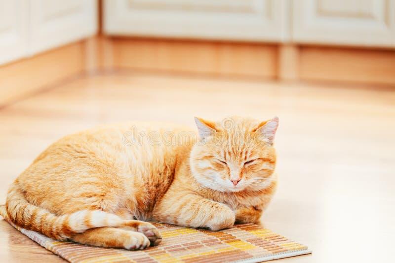 Peaceful Orange Red Tabby Cat Male Kitten Sleeping royalty free stock photos