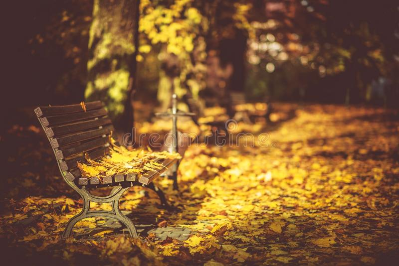 Peaceful Park Bench. Peaceful Fall Foliage Park Bench. Bench Covered by Yellow Leaves royalty free stock photography