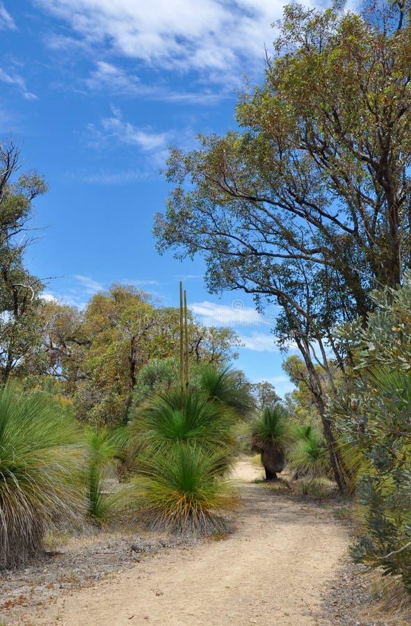 Peaceful Path: Australian Bushland royalty free stock photos