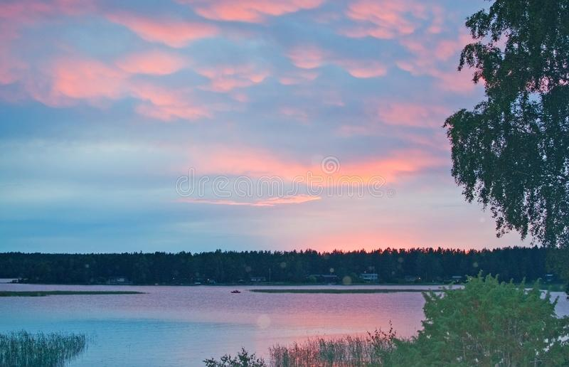 Peaceful pink sunset by a lake with birch tree royalty free stock photography