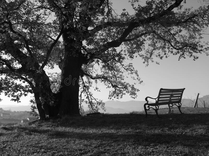A peaceful place. A bench under an oak and lots of peace stock images